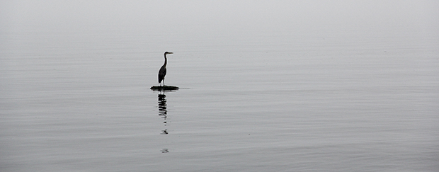 Heron Photo before